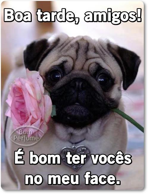 Boa Tarde - Imagens para facebook
