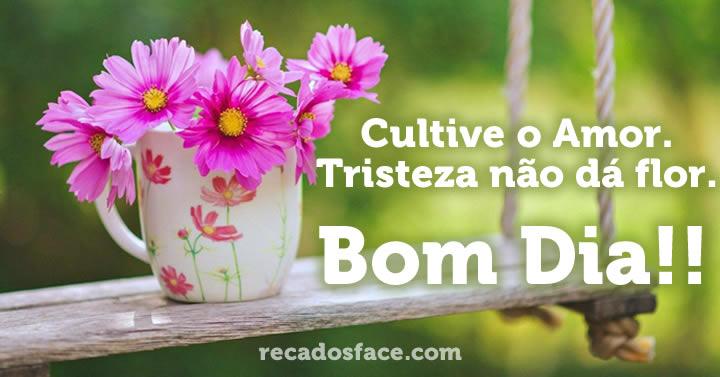 Imagens de Bom Dia. Cultive o Amor. Tristeza não dá flor. Bom Dia!