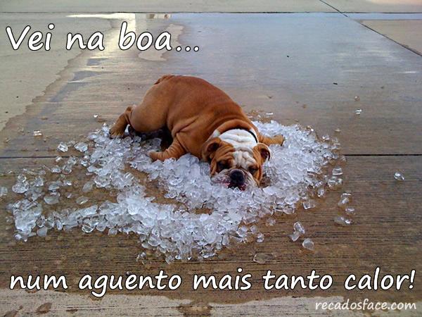 Que Calor, Cachorro com calor